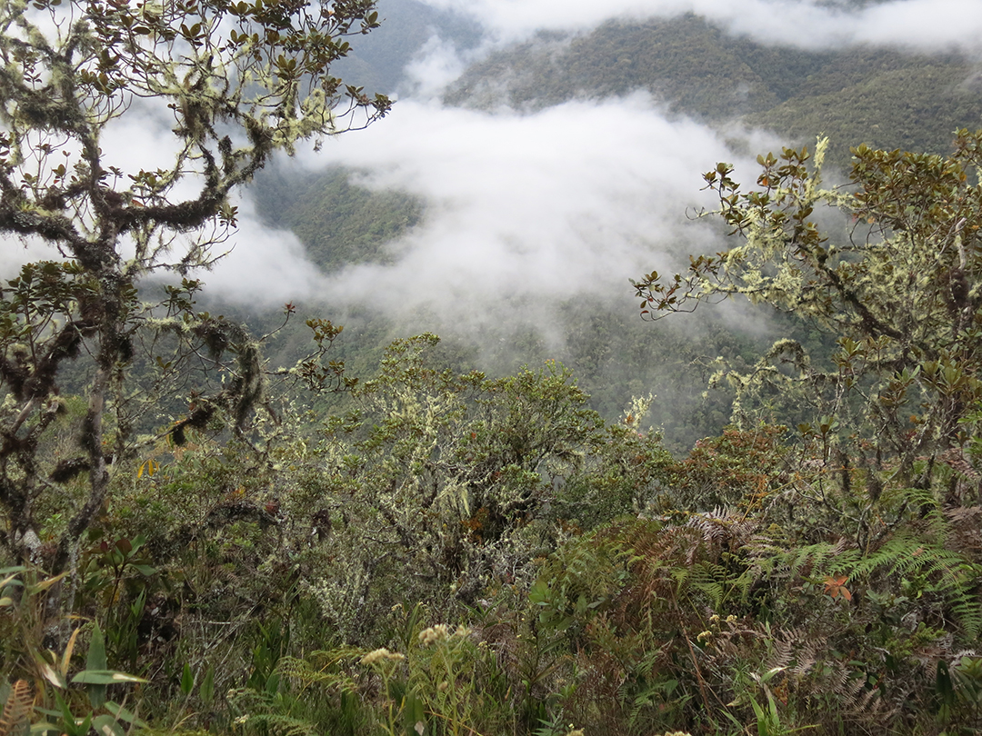 Peru cloud forest
